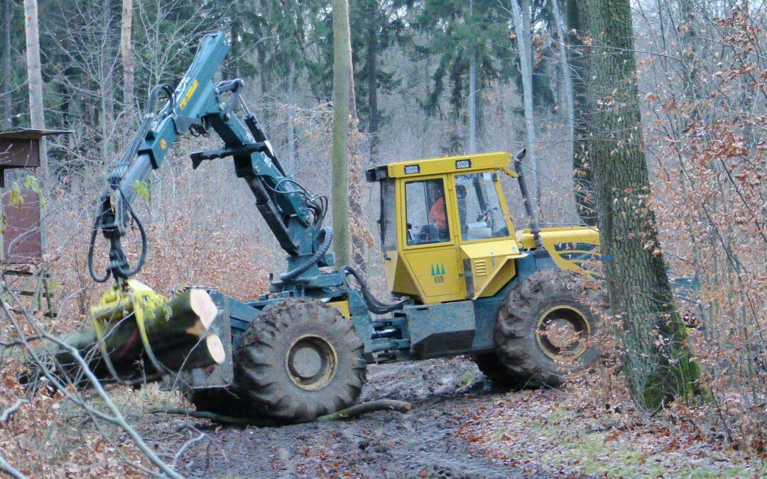 Travaux d'abattage d'arbres